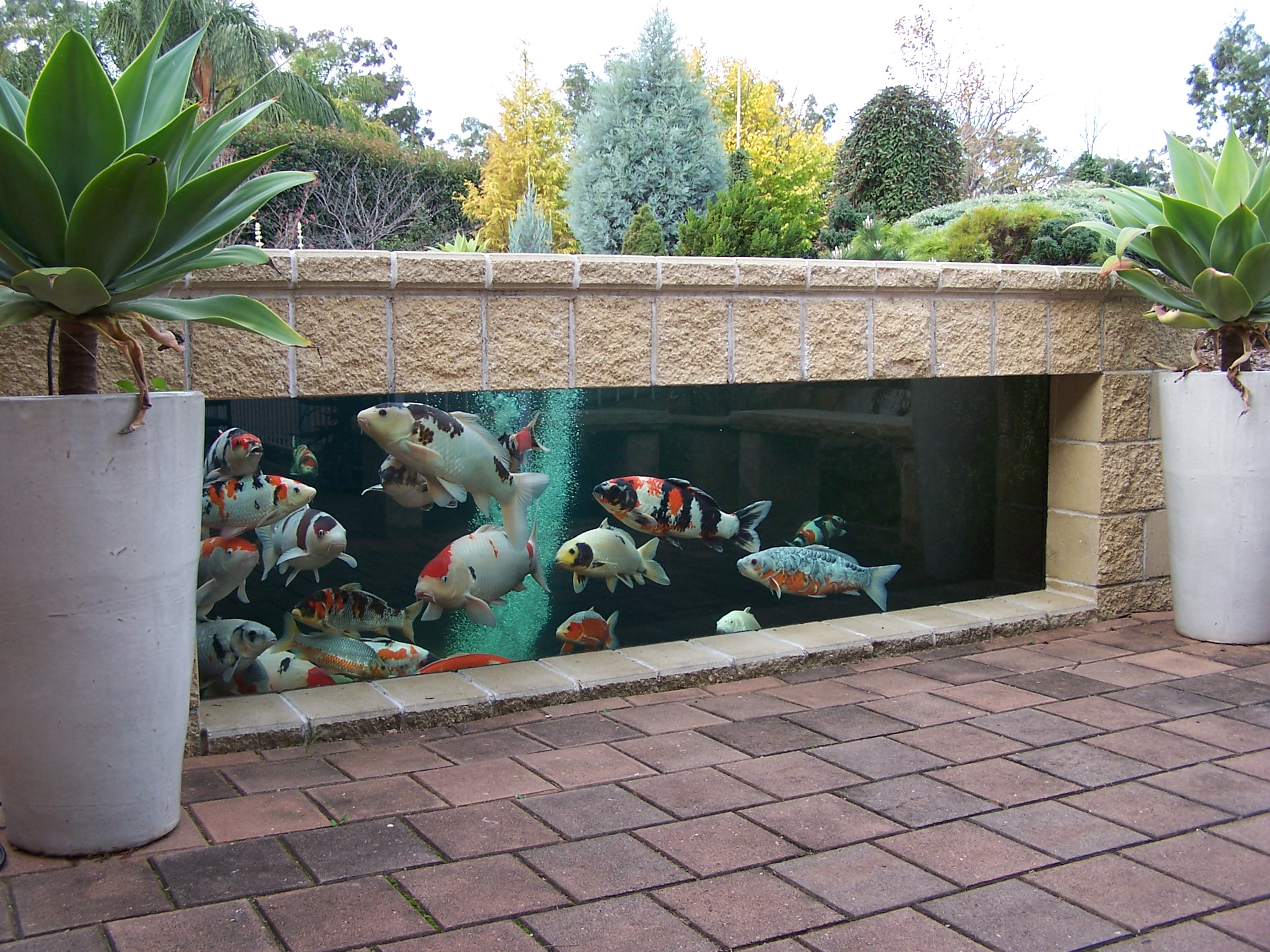 Fish pond systems for Australian Koi and Carp. Proving tanks, ponds ...